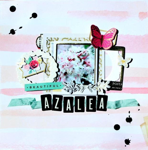 azalea 1